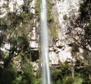 Cascata Plums