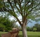 Agroindústria Rodeio da Figueira